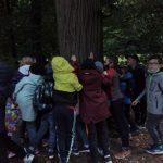 Grupa dzieci dotyka korę lipy.